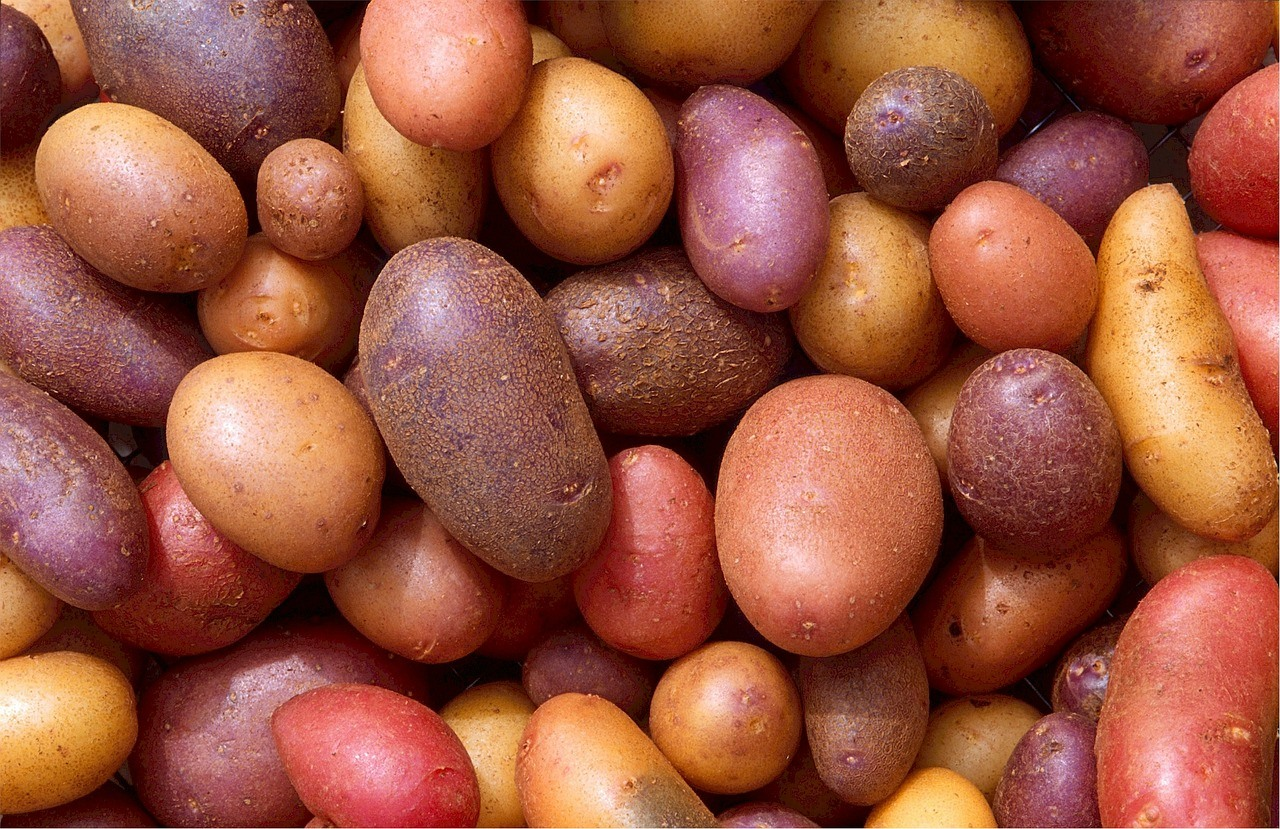 potatoes are part of the nightshade family